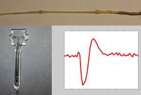 Measured magnetic field