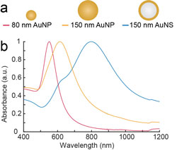 The absorptions of different nanoparticles