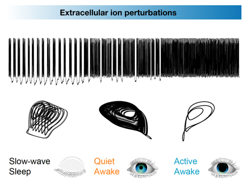 Extracellular io pertubations